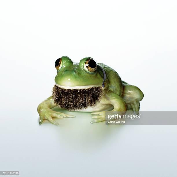 Frog Wearing Beard