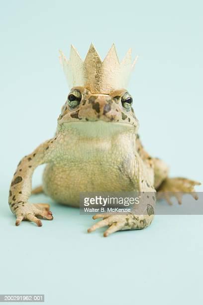 Frog wearing crown