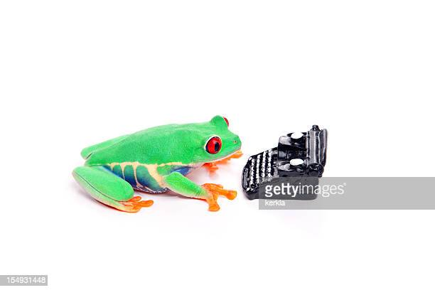 Frog with typewriter