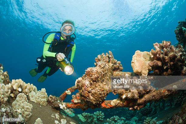Frogfishes and Diver Antennarius commersonii Maui Hawaii USA