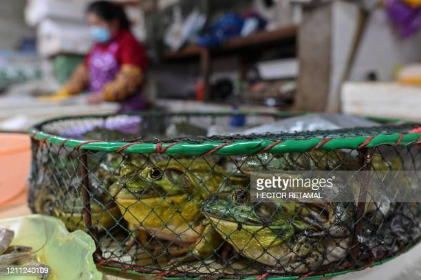 Frogs are displayed for sale at a wet market in Shanghai on April 29, 2020. - China's economy shrank for the first time in decades last quarter as...