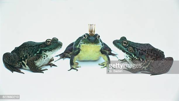 Frogs with the king of frogs