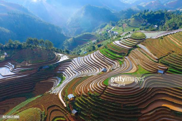 from above view on rice terraces in ha giang province of china flooded with water growing rise - reisterrasse stock-fotos und bilder