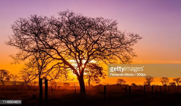 from 'cerrado - cerrado stock pictures, royalty-free photos & images