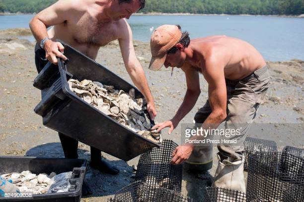 From left Will Brune and Dean Doyle divvied up shells in between oyster boxes while working with The Nature Conservancy to place baby oysters into...