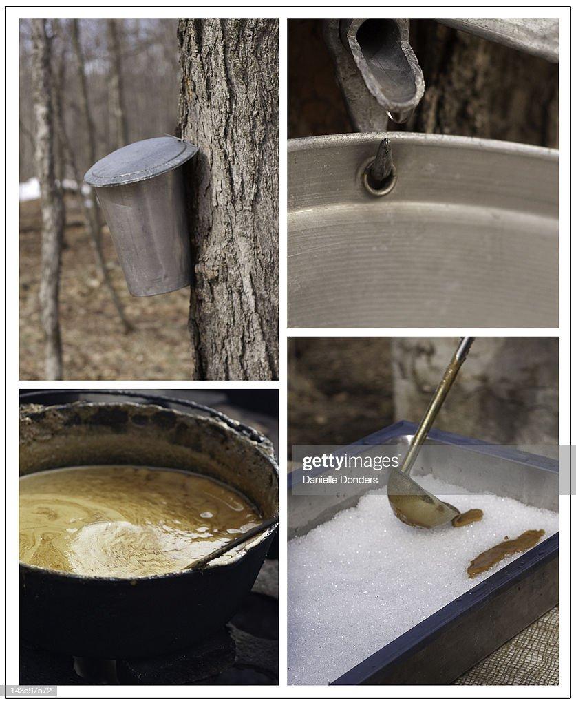 From maple tree to taffy : Stock Photo