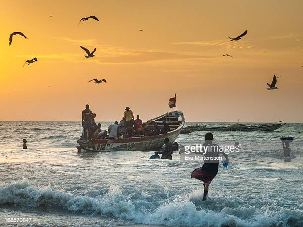 CONTENT] From Tanji fishing village in The Gambia It´s in the evening and the fishing boats are returning to unload the catch of the day All people...