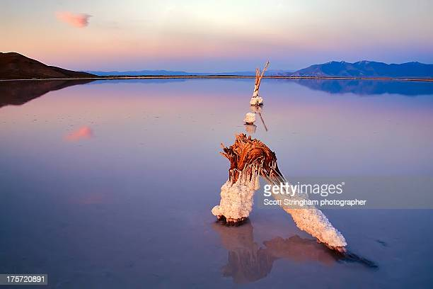 from the land of clear blue waters @ great salt la - great salt lake stock pictures, royalty-free photos & images