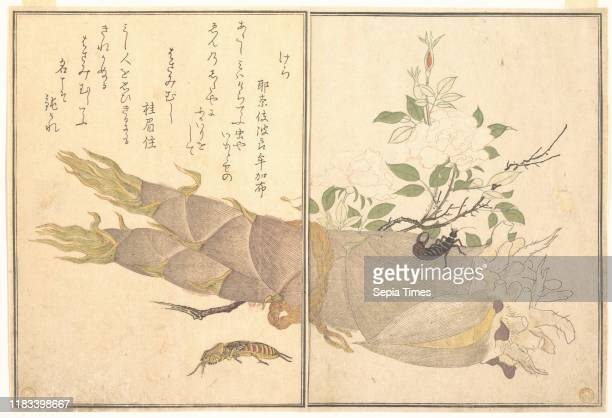 from the Picture Book of Crawling Creatures Edo period Japan Page from woodblock printed book ink and color on paper 10 1/2 x 7 7/32 in Prints...
