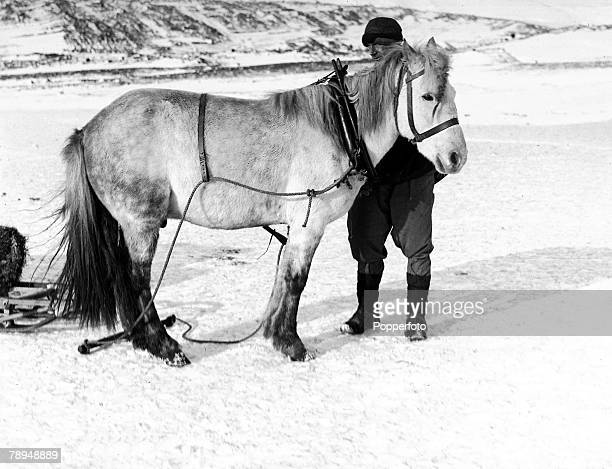 From the Ponting Collection Captain Robert Falcon Scott Photographer Scotts Antarctic Expedition 1910 1912 Dr Wilson and his pony 'Nobby' on the snow