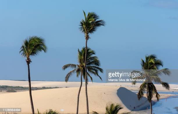 from the top the stunning view of the dune of the sunset and the other dunes that make up the scenery of jericoacoara. - pessoas stock pictures, royalty-free photos & images