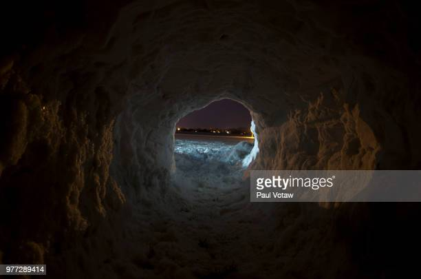 from within - marsupial stock pictures, royalty-free photos & images