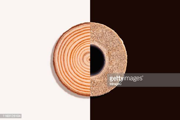 from wood to tissue paper - toilet paper tree stock pictures, royalty-free photos & images