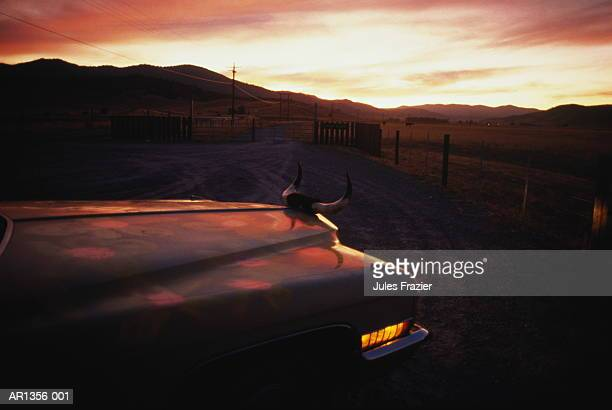 front end of car with bull horns as hood ornament, usa - hood ornament stock pictures, royalty-free photos & images