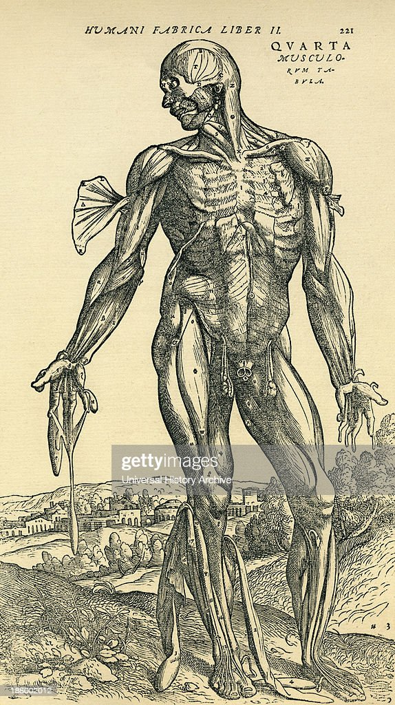 Front Of Male Human Body Anatomical Study Originally Published In
