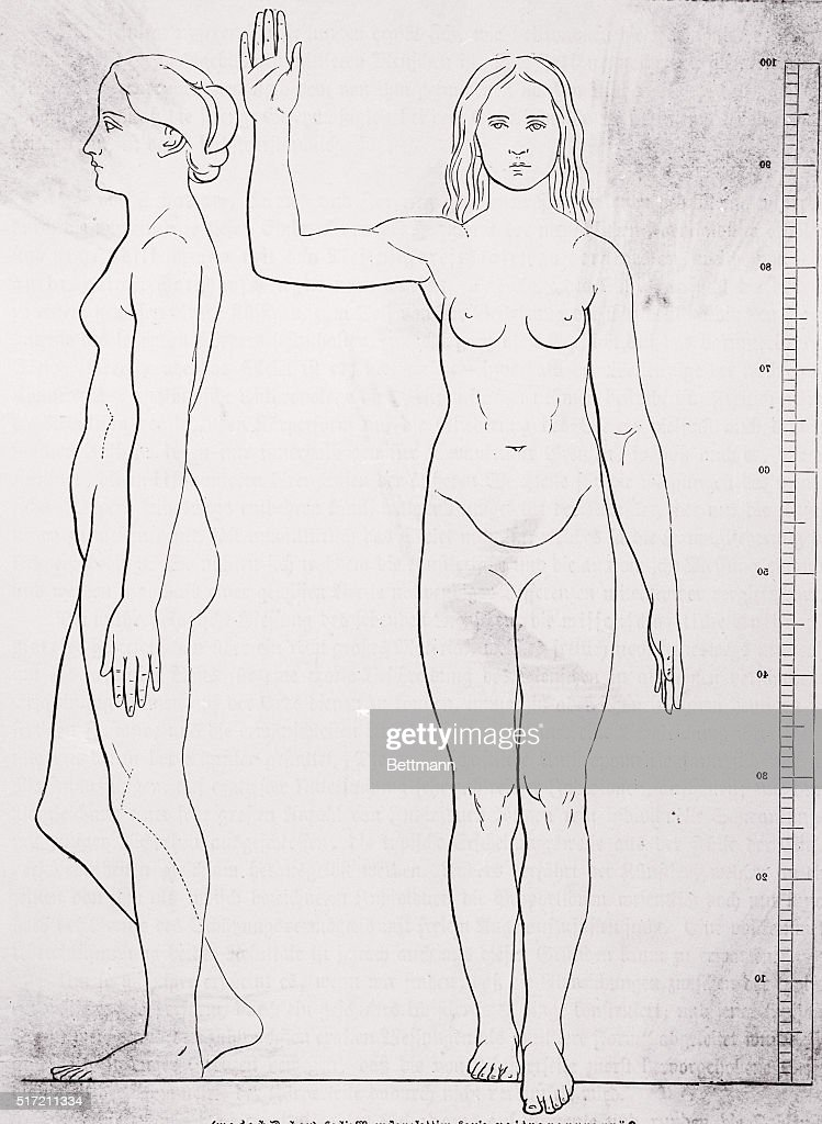 Front View And Profile Anatomical Drawing Of A Nude Woman Standing