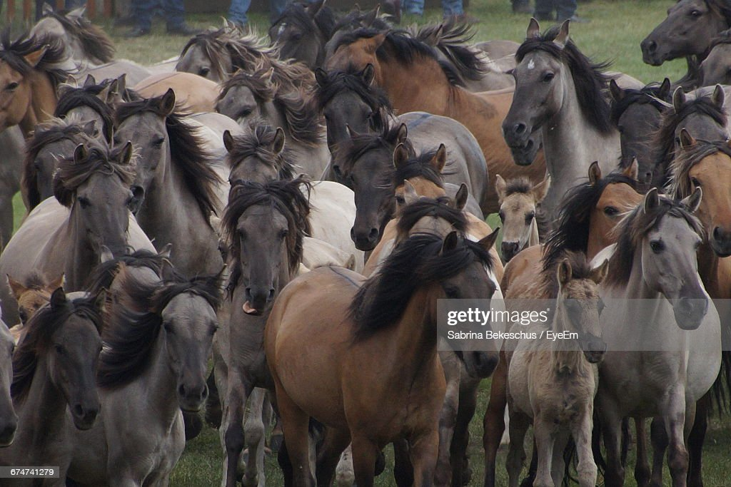 Front view of horses running on grass stock photo getty images front view of horses running on grass sciox Choice Image