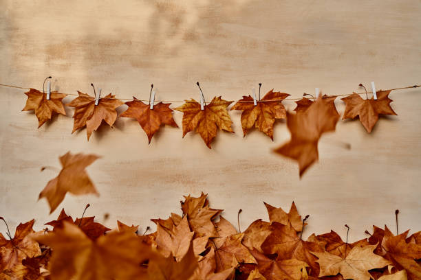 Front view of seven dry leaves hanging by white clothspin in a string line while two leaves falling on foliage on the floor on an orage background in an autumn studio scene. Horizontal photo