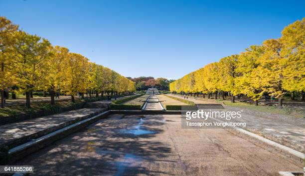 Front view of Showa Kinen Koen memorial park in autumn season with yellow ginkgo leaves