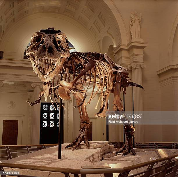 Front view of the completed and mounted fossil skeleton of Sue a Tyrannosaurus Rex at the Stanley Field Hall in the Field Museum Chicago Illinois...