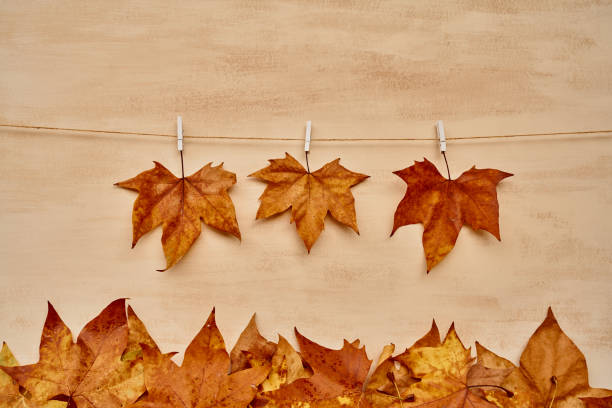 Front view of three dry leaves hanging by white clothspin in a string line while two leaves falling on foliage on the floor on an orange background in an autumn studio scene. Horizontal photo