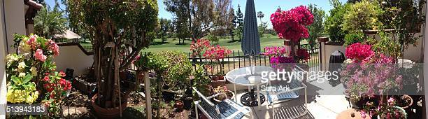 Front yard full of flowers in a Tustin California