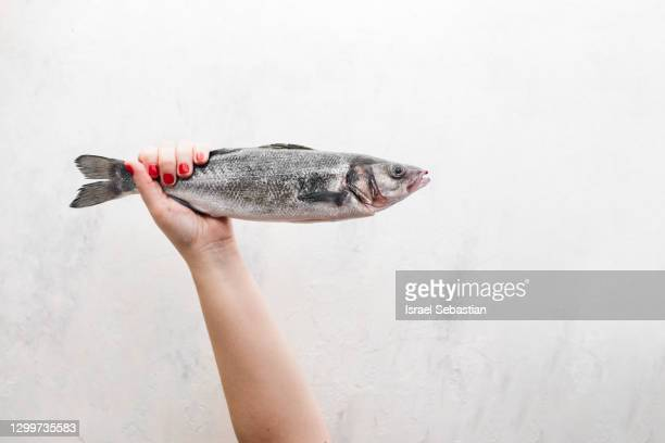 frontal view of a woman's hand with red fingernails while holding a sea bass by the tail on a white background - オキスズキ ストックフォトと画像