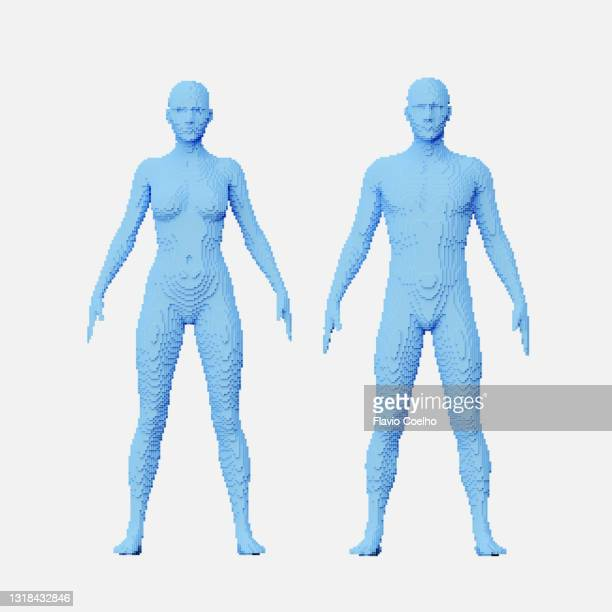 frontal view of full male and female body voxel models - wire frame model stock pictures, royalty-free photos & images