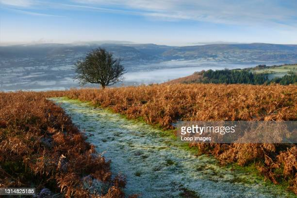 Frost covered footpath on the south side of the Sugar Loaf mountain.
