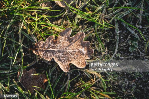 Frost covered leaf on frozen ground