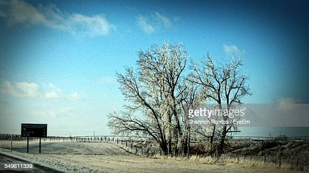 Frost Covered Trees On Roadside
