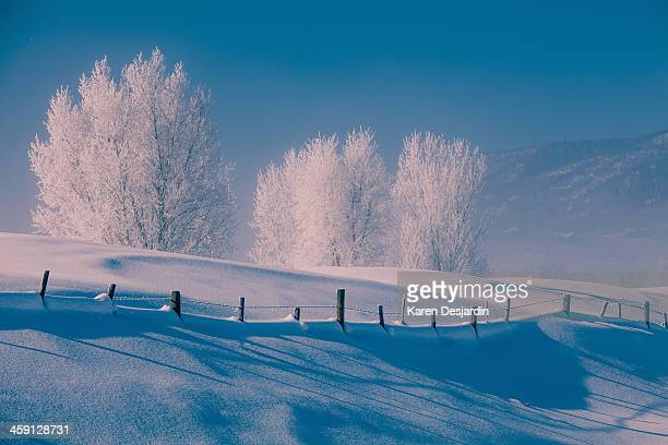 frost covered trees, snow and blue sky - steamboat springs colorado stock photos and pictures