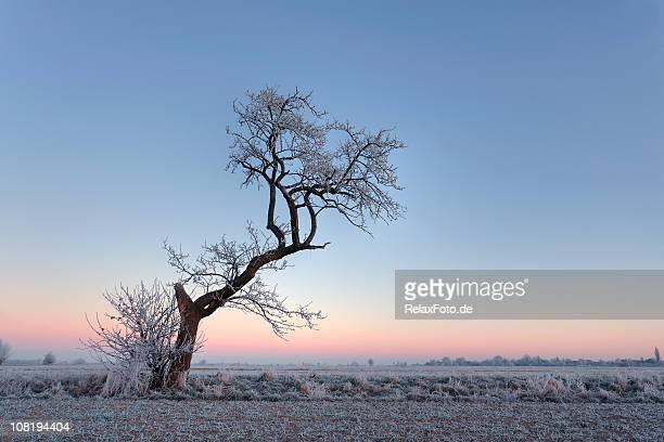 frost sulla terra e contorto, lone tree all'alba - albero spoglio foto e immagini stock