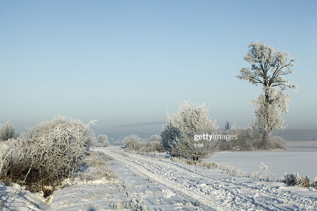 Frost covering ground : Stock Photo