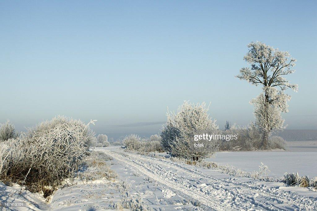 Frost sur rez-de-chaussée : Photo