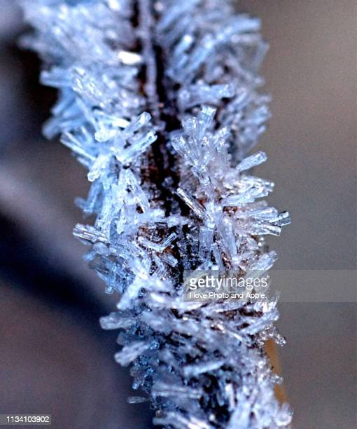 frost leaves - 雪 stock pictures, royalty-free photos & images