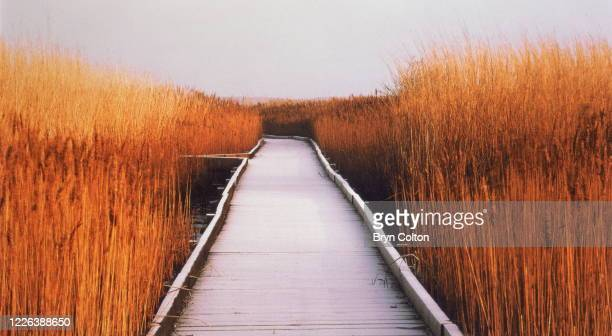 Frost on a boardwalk in marshes at Cley next the Sea Norfolk England