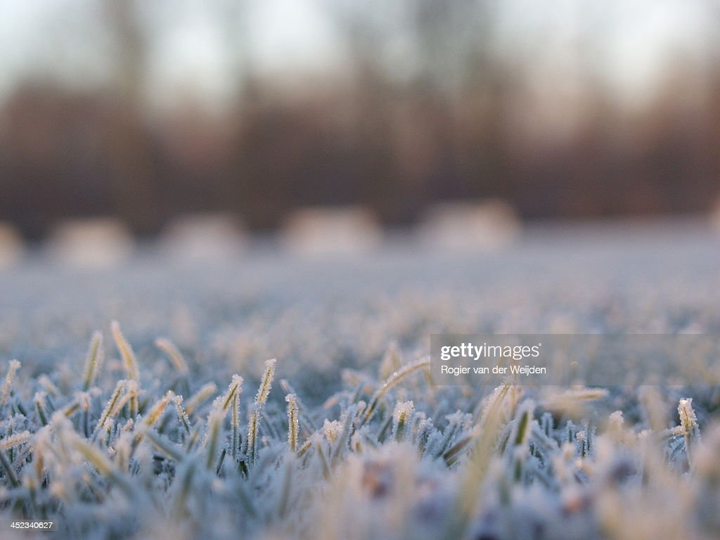 Frost on a football field : Stock Photo