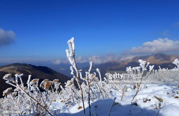 frost on gentle slopes under the blue sky - snowfield stock pictures, royalty-free photos & images