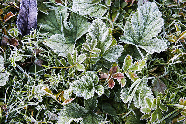 Frost on Plants on an Autumn Morning