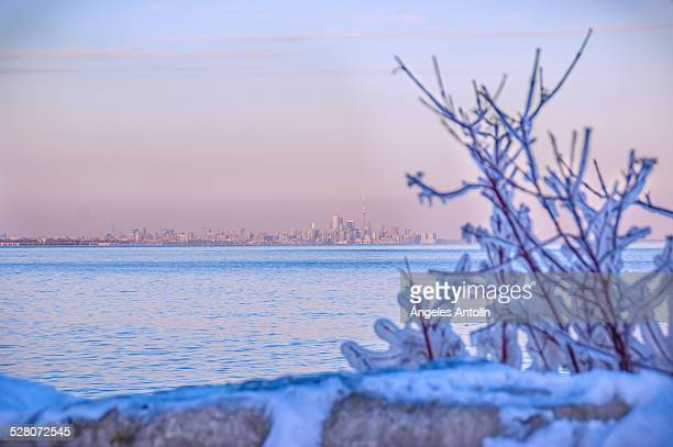 frost - mississauga stock pictures, royalty-free photos & images