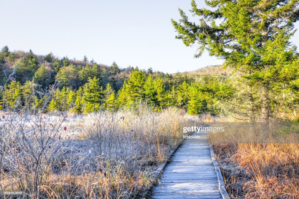 Frost white winter landscape with bushes, boardwalk and morning orange sunlight in Cranberry Wilderness glades bog, West Virginia and ice covered plants : Stock Photo