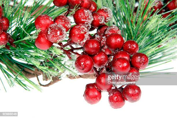 frosted berries - christmas holly stock photos and pictures