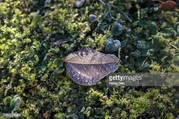 Frosted leaf on field - Heilbronn, Germany