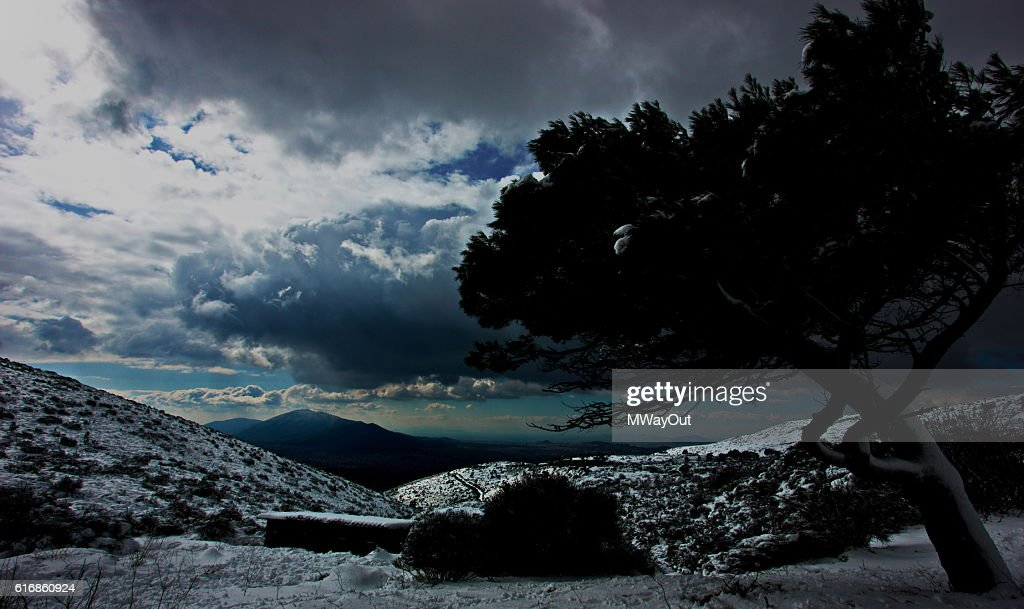 Frosted tree under cloudy winter sky, Athens, Greece : Stock Photo