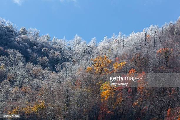 frosty autumn newfound gap road - newfound gap stock pictures, royalty-free photos & images