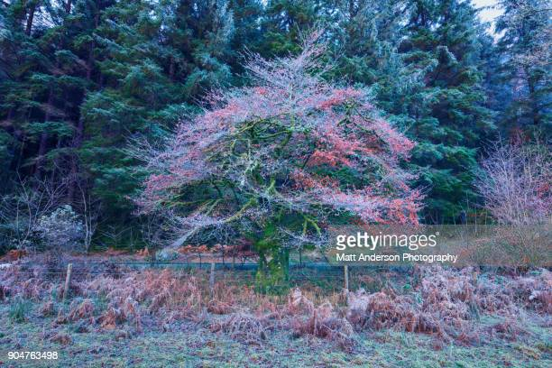 Frosty Colorful Tree Pink