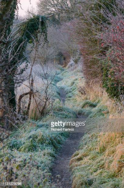 frosty footpath - winchester hampshire stock photos and pictures