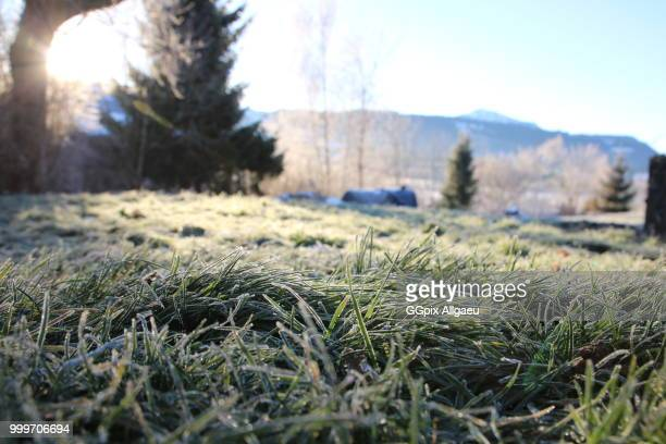 frosty gras - gras stock pictures, royalty-free photos & images