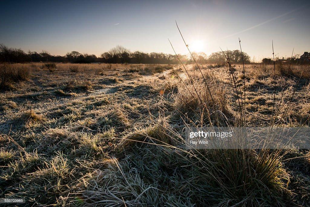 Frosty landscape : Foto stock
